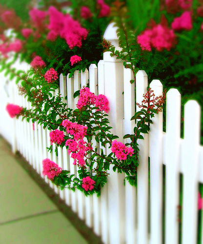 picket-fence-with-flowers