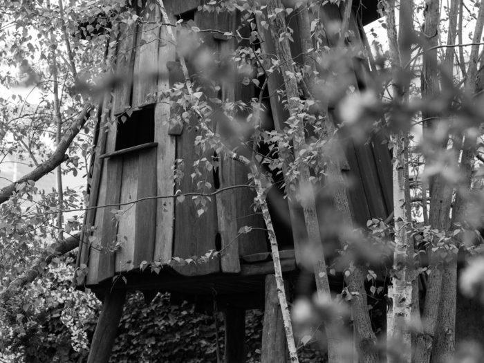 treehouse-1364512_1920