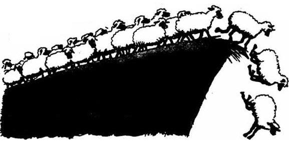 cliff-ideas-sheep